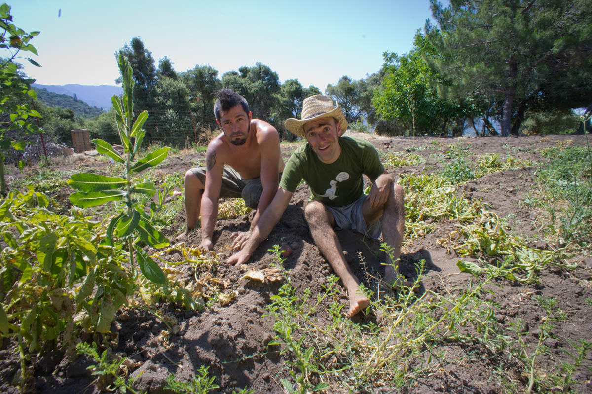http://www.thetravelclub.org/images/traveloscope/wwof/wwoof-1.jpg